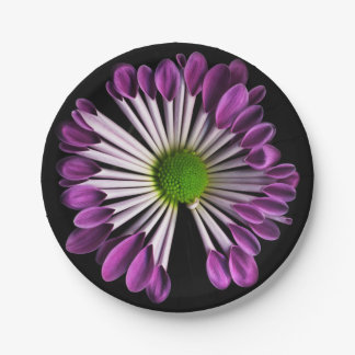 Plants on Plates Purple Mum