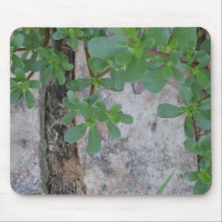 Plants on Stone Mouse Pad