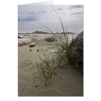 Plants on the Beach (card) Card
