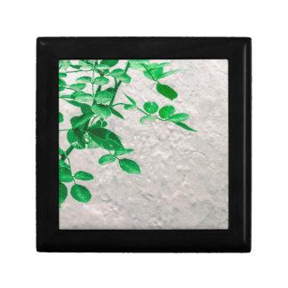Plants over Wall Photo Gift Box
