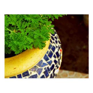 Plants Pot Postcard