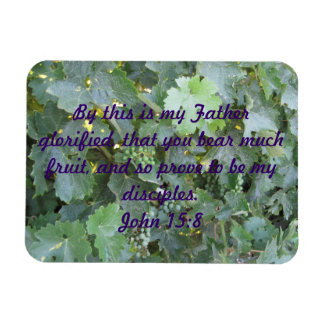 Plaque: Close-up of Grape Vine with Young Grapes Rectangular Magnet