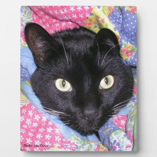Plaque: Funny Cat wrapped in Blankets Plaques