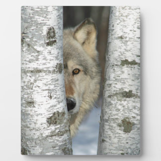 plaque with photo of gray wolf in some birch trees
