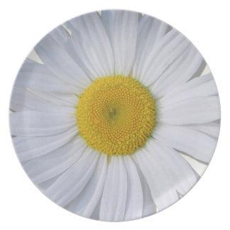 Plate - New Daisy All Daisy