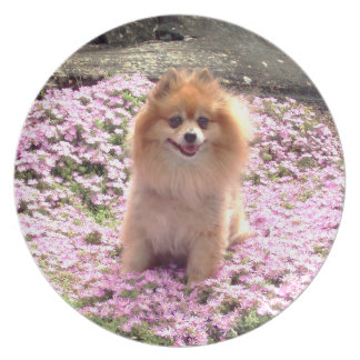 Plate   Pomeranian Pink Flowers 1