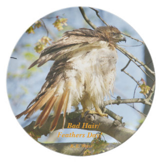 Plate showing hawk haveing a bad hair day