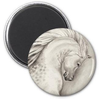 Platinum arabian magnet