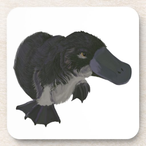 Platypus Coaster