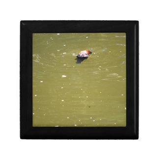 PLATYPUS DIVING IN WATER EUNGELLA AUSTRALIA GIFT BOX