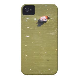 PLATYPUS DIVING IN WATER EUNGELLA AUSTRALIA iPhone 4 CASE
