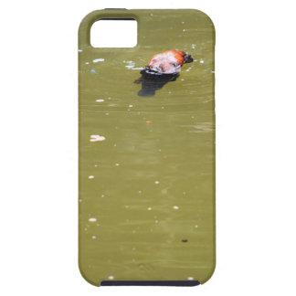 PLATYPUS DIVING IN WATER EUNGELLA AUSTRALIA iPhone 5 COVER