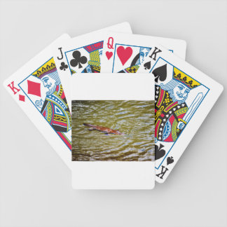 PLATYPUS EUNGELLA NATIONAL PARK AUSTRALIA BICYCLE PLAYING CARDS