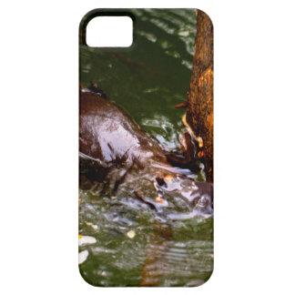 PLATYPUS EUNGELLA NATIONAL PARK AUSTRALIA CASE FOR THE iPhone 5