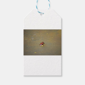 PLATYPUS EUNGELLA NATIONAL PARK AUSTRALIA GIFT TAGS