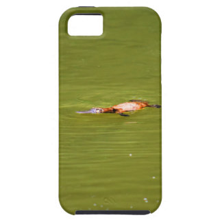 PLATYPUS EUNGELLA NATIONAL PARK AUSTRALIA iPhone 5 CASE