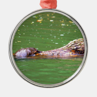PLATYPUS EUNGELLA NATIONAL PARK AUSTRALIA METAL ORNAMENT
