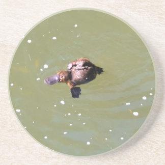 PLATYPUS IN WATER EUNGELLA NATIONAL PARK AUSTRALIA COASTER