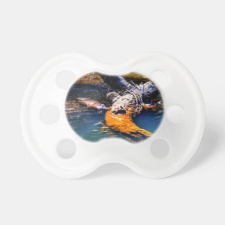 PLATYPUS IN WATER EUNGELLA NATIONAL PARK AUSTRALIA PACIFIERS