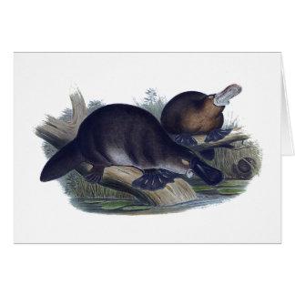 Platypus on a Log Illustration Greeting Card