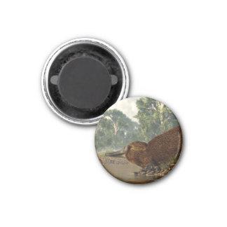 Platypus on the Shore 3 Cm Round Magnet