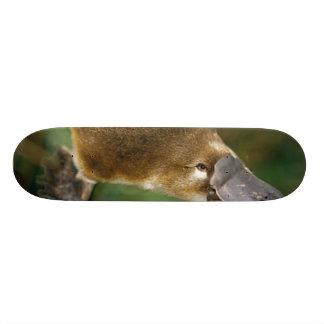 Platypus Skate Board Deck