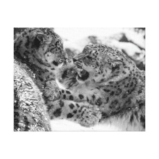 Play-Fighting Snow Leopard Brothers Canvas Print