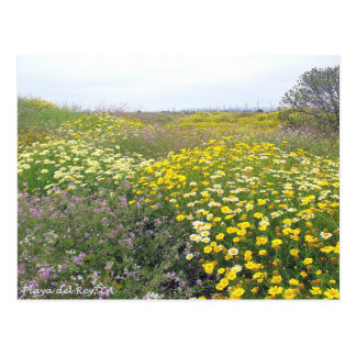 Playa del Rey Wildflowers - Mike Izzo Postcard