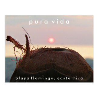 Playa Flamingo Sunset Coconut Costa Rica Postcard
