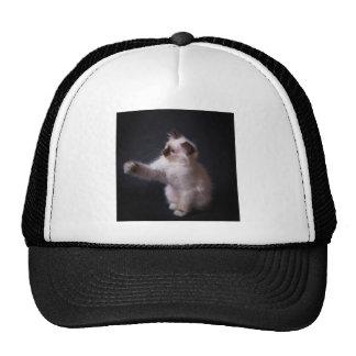 player cat mesh hat