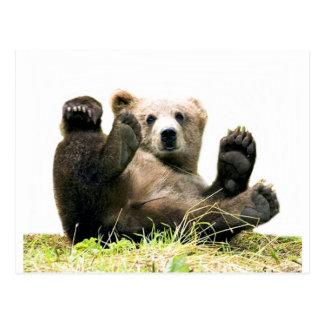 Playful Bear collection Postcard