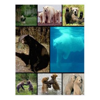 Playful Bears Postcards