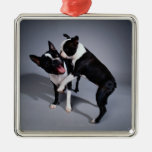 Playful Boston Terriers Christmas Ornament