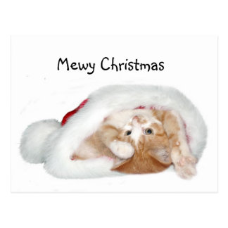 Playful Christmas kitten Postcard
