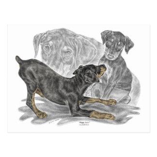 Playful Doberman Pinscher Puppies Post Card