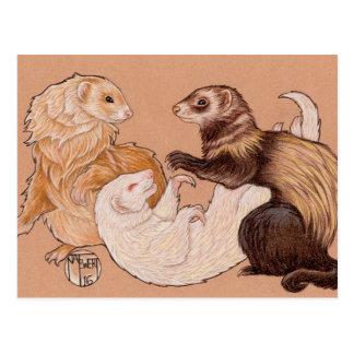 Playful Ferrets Postcard