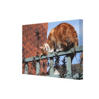 Playful Ginger Cat Canvas Print
