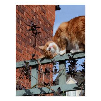 Playful Ginger Cat Postcard
