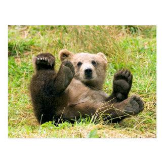 Playful Grizzly Bear Postcard