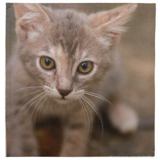 Playful Kitten Napkin