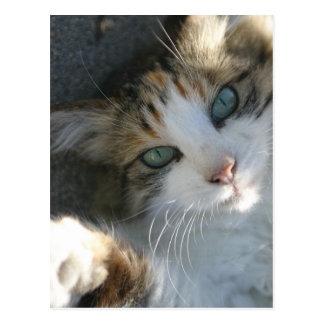 Playful Kitty Post Card