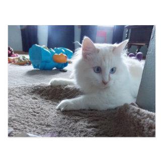 Playful kitty Postcard
