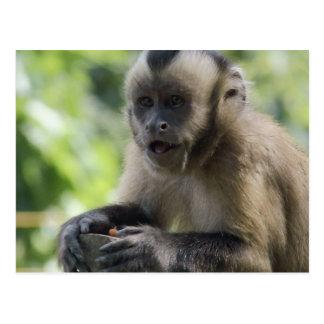 Playful Monkey  Postcard
