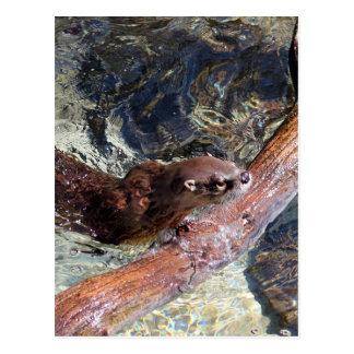 Playful Otter Postcard