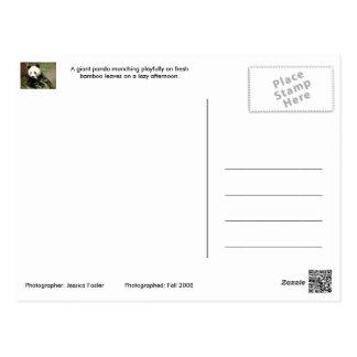 Playful Panda Postcard