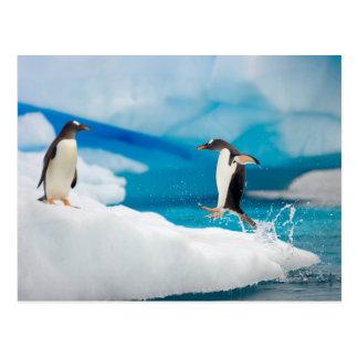 Playful Penguins Postcard