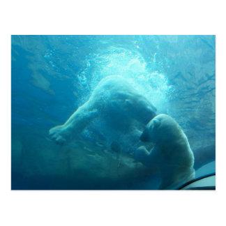 Playful Polar Bears Postcard