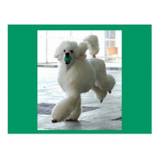 Playful Poodle Postcards