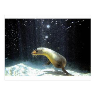 Playful sea lion Galapagos Islands Postcard