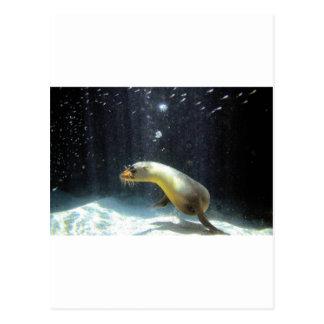 Playful sea lion Galapagos Islands Postcards